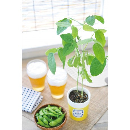 Edamame Cultivation Set | Seishin Tougei | Soya Bean Growing Kit