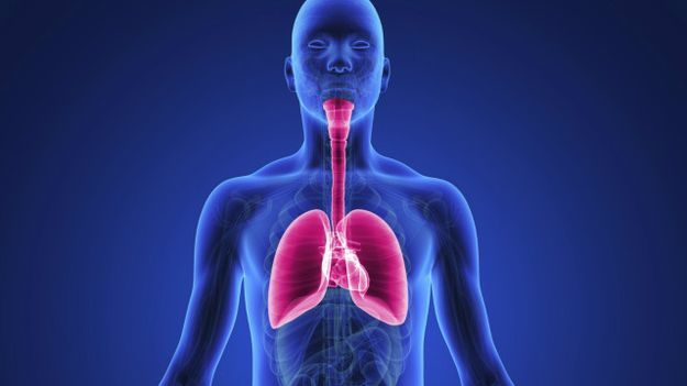 The human lung is incapable of breathing fluids