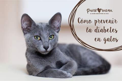 Cómo prevenir la diabetes en gatos