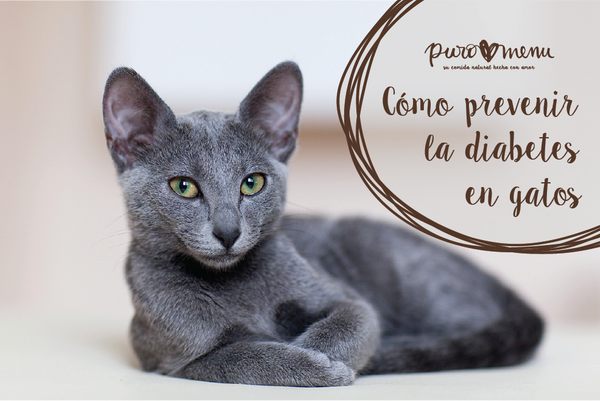 prevenir la diabetes en gatos