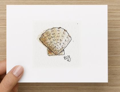 Scallop Shell Note Cards
