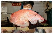 Load image into Gallery viewer, Wild Caught Red Snapper aka Ang Kuay