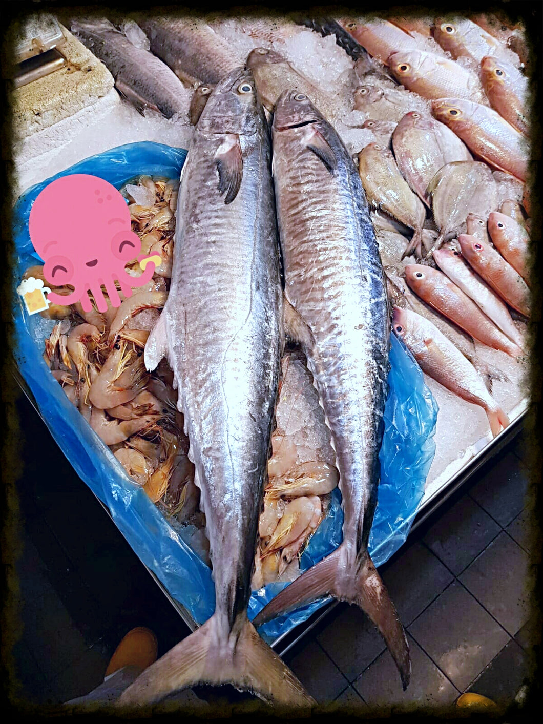 Wild Caught Kingfish aka Batang