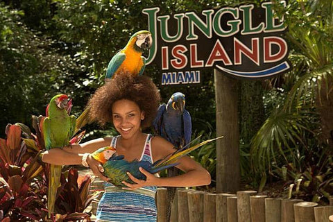 An amusement park located on Watson Island. Jungle Island is known for its unforgettable shows featuring tigers, lions, exotic birds and other fauna.