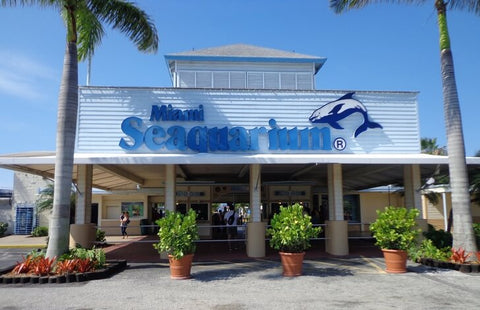 The Miami Aquarium is one of the first marine parks opened in the United States. It is home to orcas, sharks, seals, crocodiles, stingrays, turtles, and beloved dolphins.