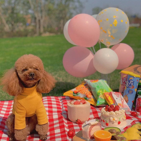 cute dog having picnic with family