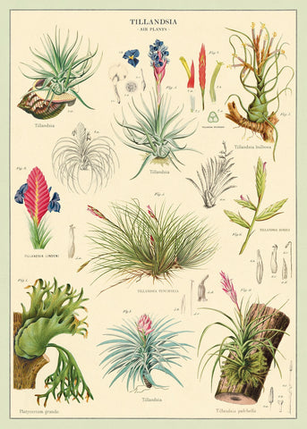 A NEW ARRIVAL Cavallini & Co. Air Plants Decorative Paper Sheet