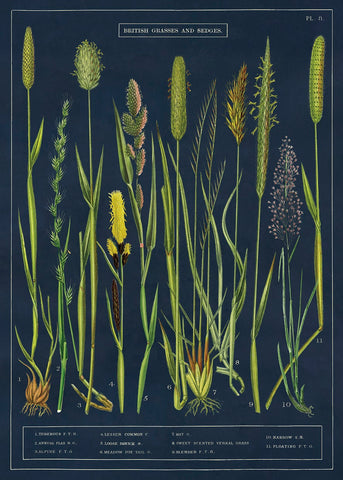 A NEW ARRIVAL Cavallini & Co. British Grasses & Sedges Decorative Paper Sheet