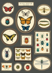 Cavallini & Co. Natural History Butterflies & Insects Decorative Paper Sheet