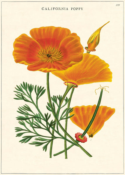 A NEW ARRIVAL Cavallini & Co. California Poppy Decorative Paper Sheet