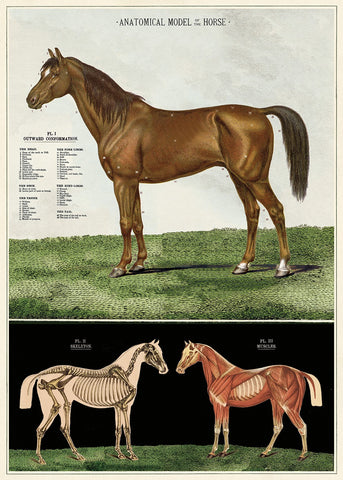 Cavallini & Co. Anatomical Model Of The Horse Decorative Paper Sheet