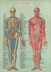 Cavallini & Co. Anatomy Chart Decorative Paper Sheet