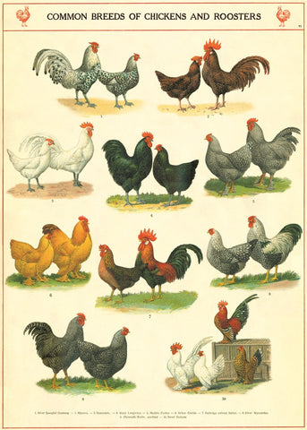 Cavallini & Co. Chickens and Roosters Decorative Paper Sheet