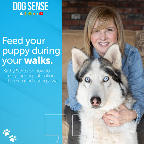 keep your puppy engaged during walks