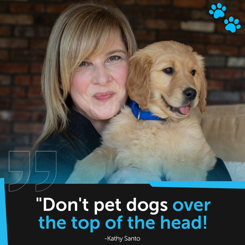 """[Image quote: """"Don't pet dogs over the top of the head!""""]"""
