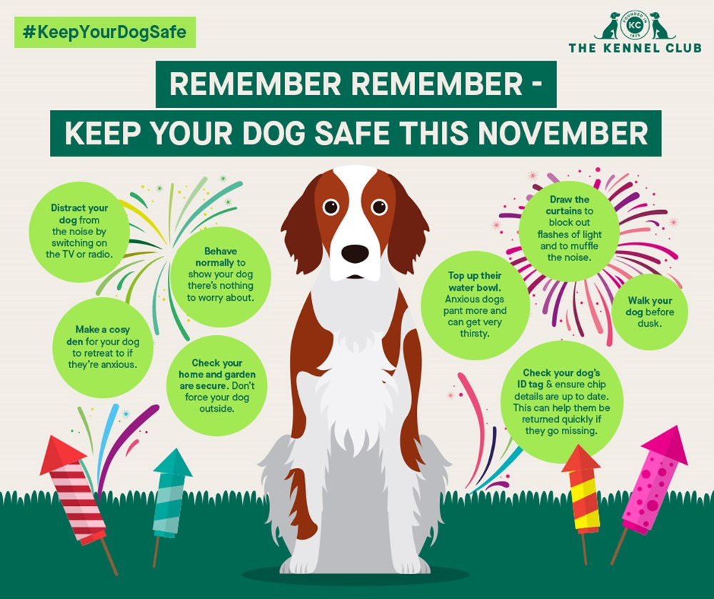 Fireworks Infographic from Kennel Club UK