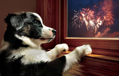 UK Fireworks Company Advice for Dogs