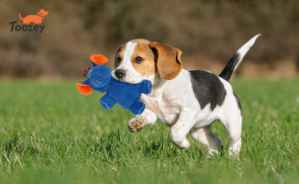 Toozey-Dog-Play-Squeaky-Toy