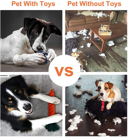 Toozey-Dog-With-and-Without-Toys