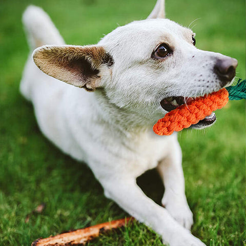 Toozey-Dog-with-Carrot-Toy