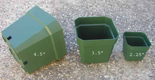 "4"" square pot 50 pack"