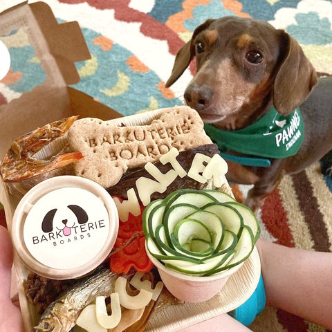 Small dog with barkuterie board