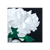 White Carnations - Canvas River