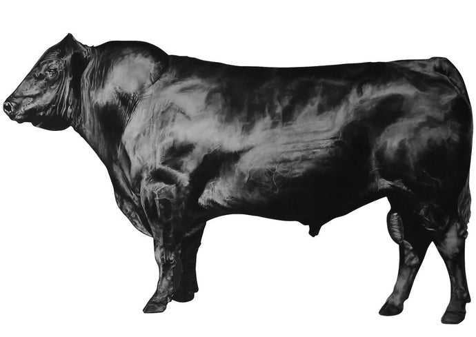 black and white drawing of a bull looking left