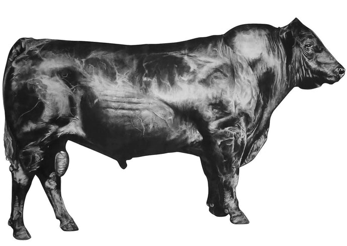 black and white drawing of a bull looking right