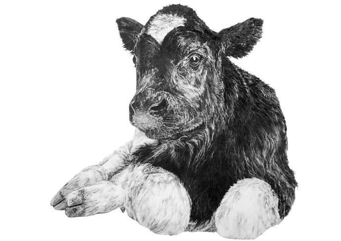black and white drawing of a calf