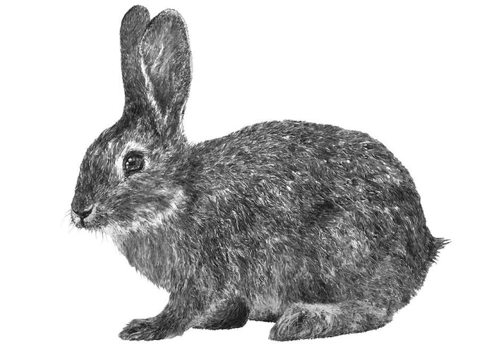 black and white drawing of a rabbit
