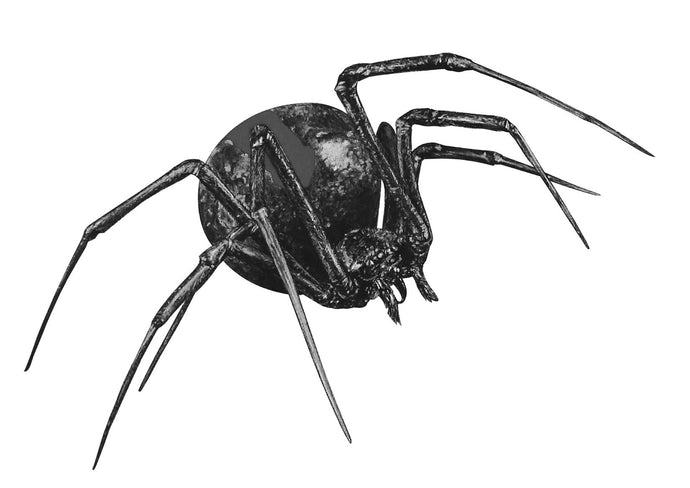 black and white drawing of a redback spider
