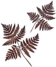 Load image into Gallery viewer, Bracken Ferns - Wall Art
