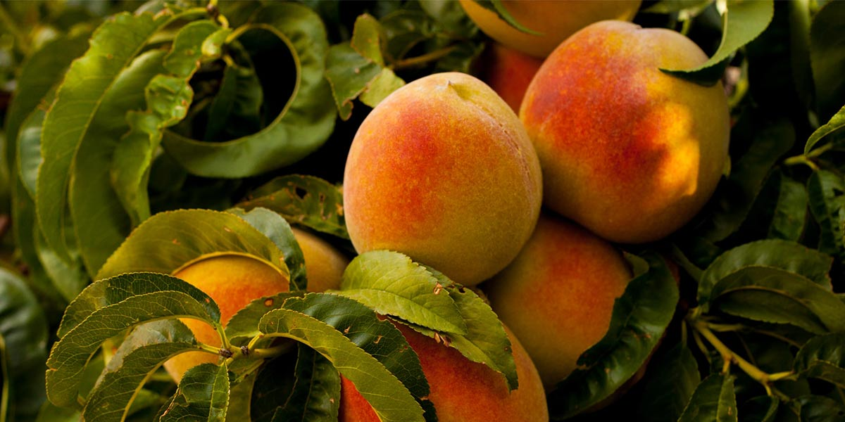 The Benefits of Eating Seasonal Food and What's in Season Right Now - Nutrova
