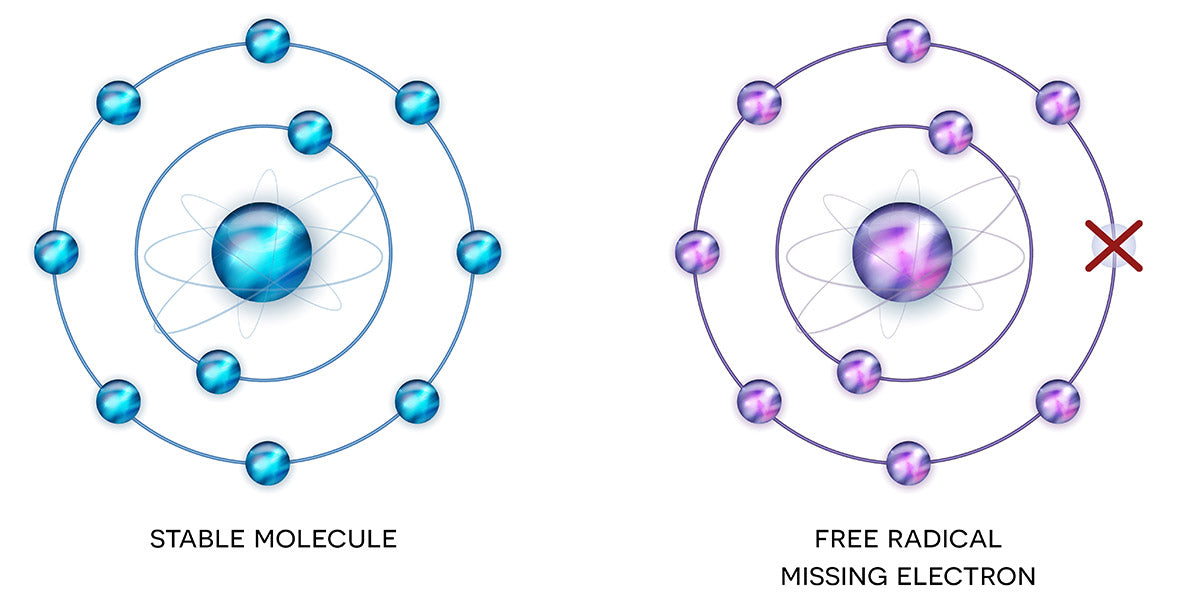 What are free radicals, can they help us build muscle - Nutrova