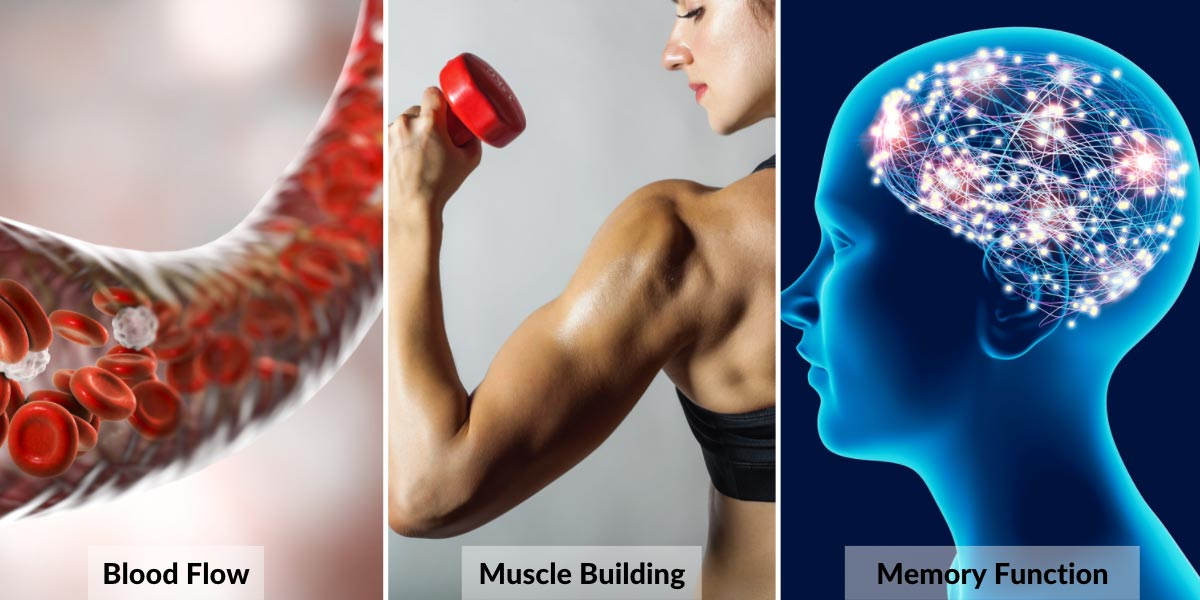 Can Free Radical Damage Help us Build Muscle? - Nutrova
