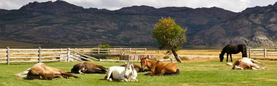 equine ethology picture