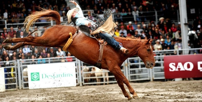 horse rodeo picture