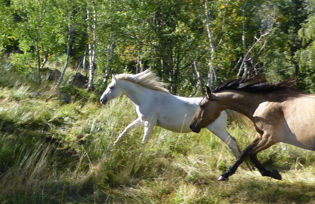 horse running in the field