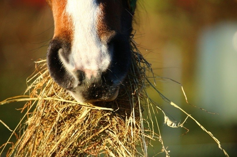 horse who is eating