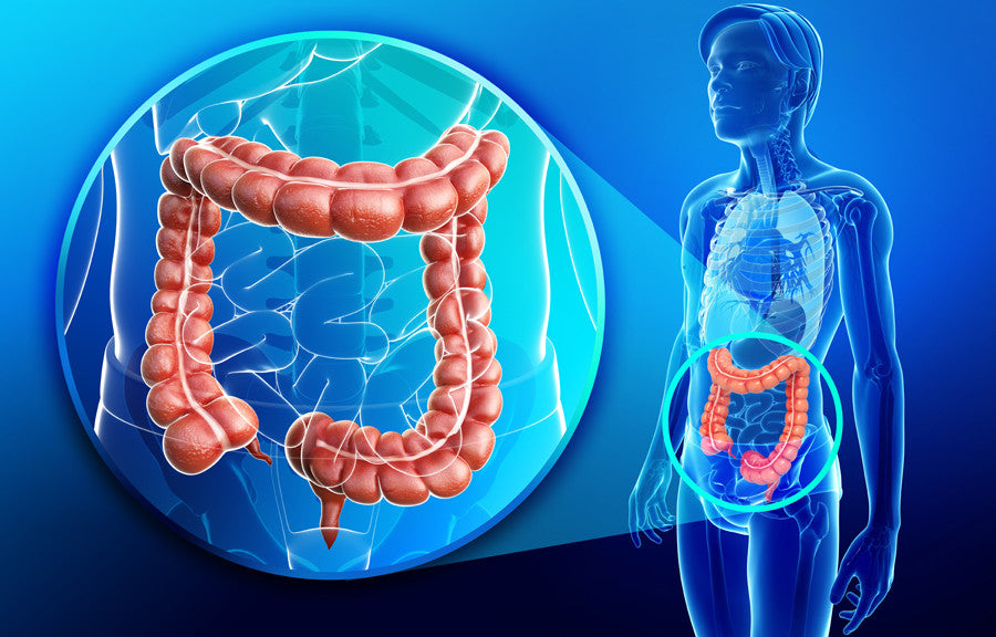 The Digestive System: Body Toxins and the Large Intestine (Gut)