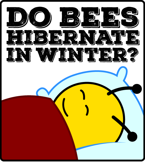 Do Bees Hibernate in Winter