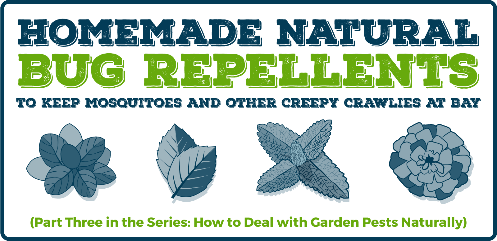 Homemade Natural Bug Repellants: (Part Three in the Series: How to Deal with Garden Pests Naturally)