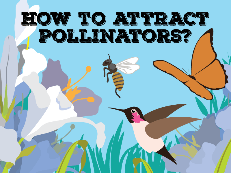 How to attract pollinators?