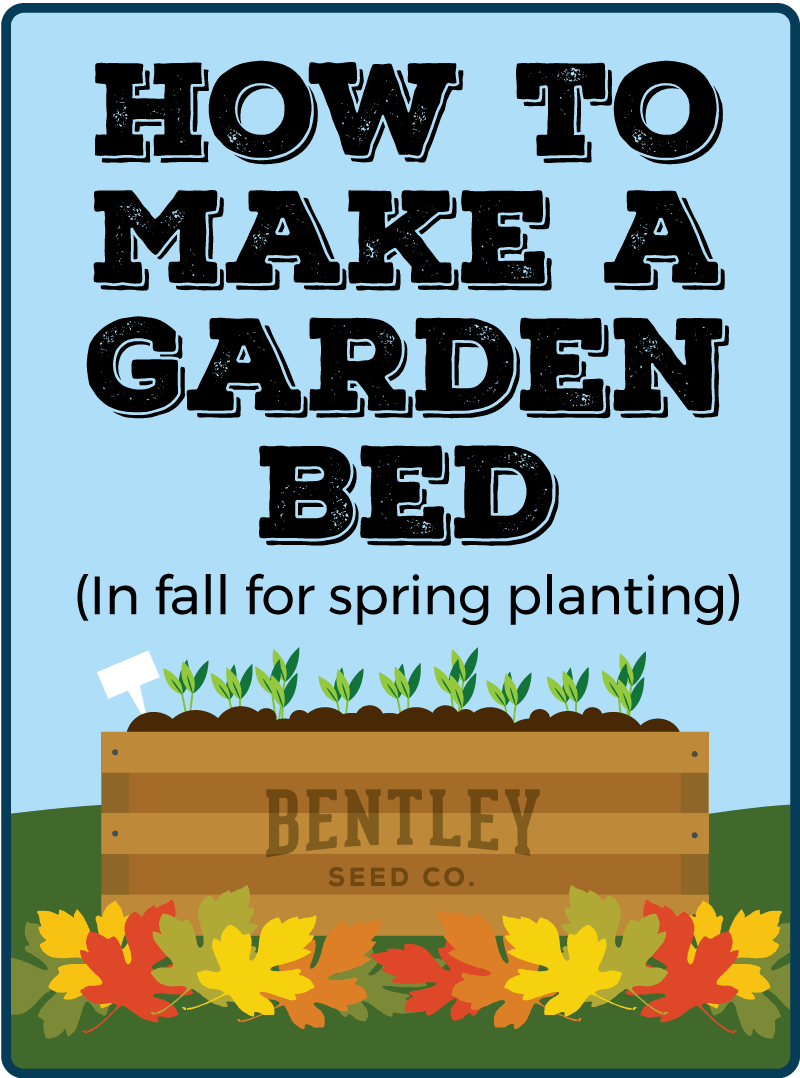 How to Make a Garden Bed (In fall for spring planting)