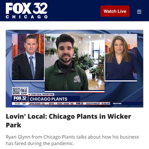 Fox 32 Lovin' Local: Chicago Plants in Wicker Park