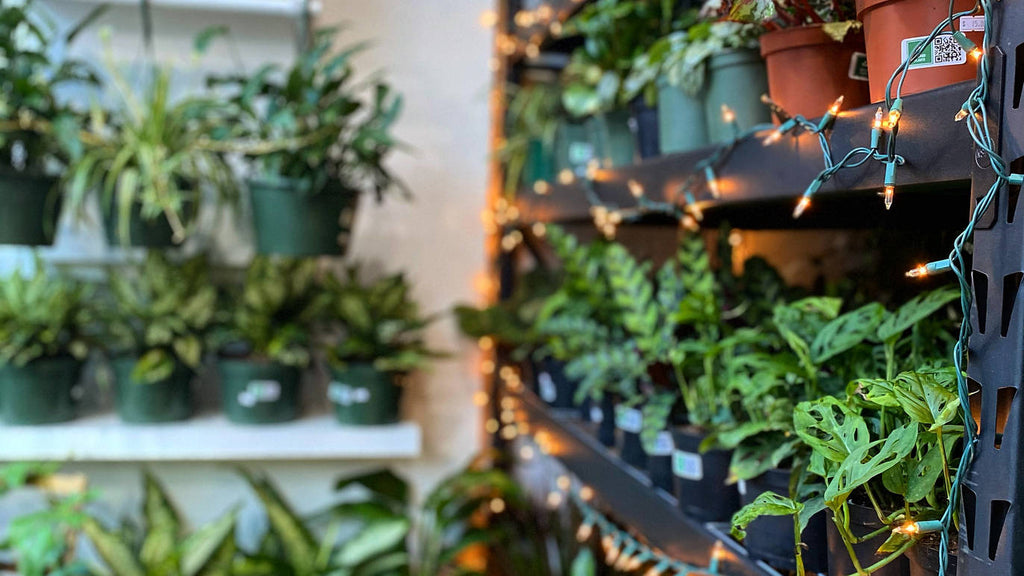 TimeOut Magazine - Winter Plant Care Tips