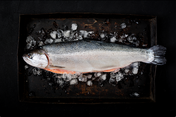Farm-raised vs. Wild Caught Salmon: Which One is Better?