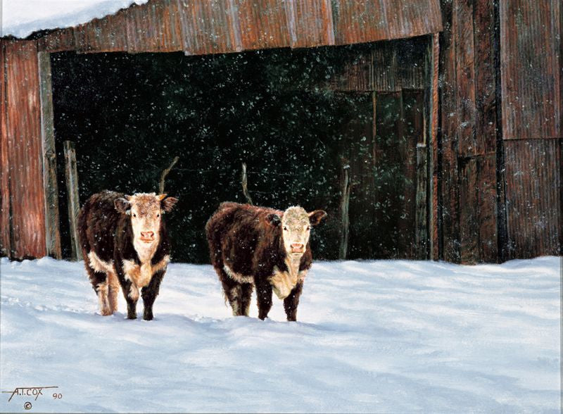 HICKS HEREFORD HEIFERS