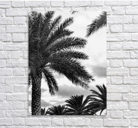 Black and White: Amici's Palm Trees
